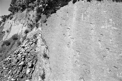 bck体育黑龙江首现大面积白垩纪恐龙足迹群 数量多(图)