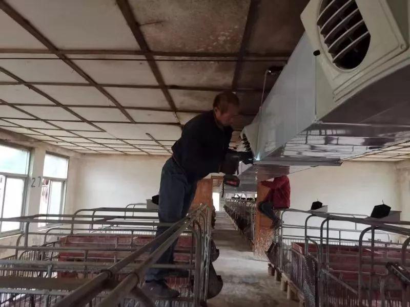 让农民还敢养猪,关键是什么?