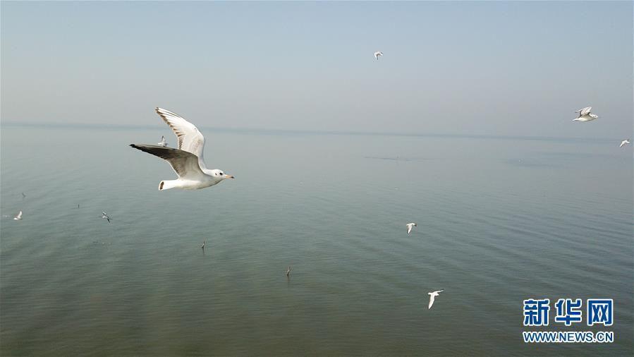 大湖见证——长三角三大淡水湖绿色发展之路