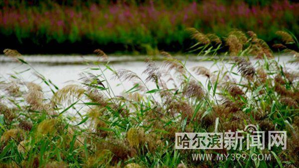 /jingji/146833.html