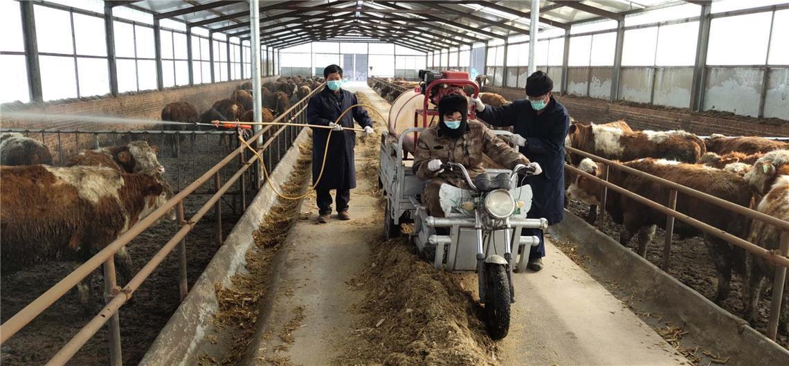 """千喜鹤:让精准扶贫的农户""""牛起来"""""""