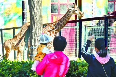 北京动物园恢复开园 探望动物的小朋友倍兴奋