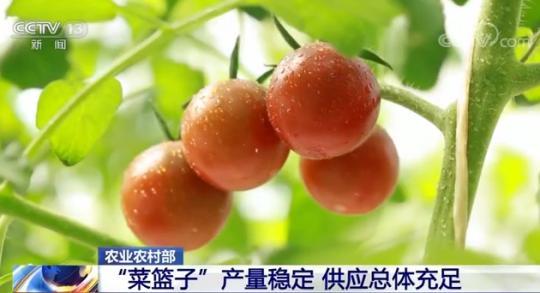 """农业农村部:""""菜篮子""""产量稳定 供应总体充足"""