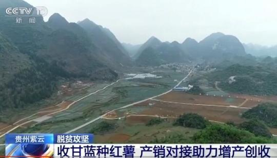贵州紫云:收甘蓝种红薯 产销对接助力增产创收
