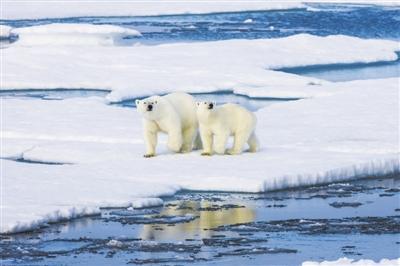 北极上方空洞或将自行恢复不会威胁人类健康