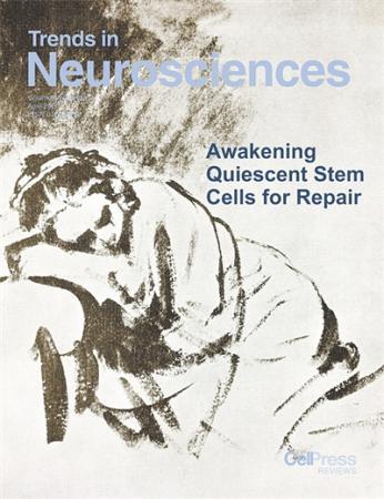 激活静息态神经干细胞 或可修复大脑损伤
