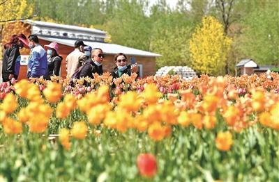 首届国际花园节亮相北京世园公园
