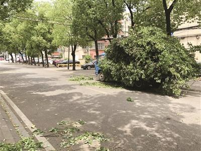 """近千棵大树被""""剃光头"""" 江苏南京园林部门紧急叫停"""