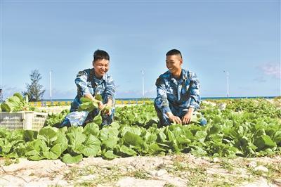 """""""点沙成土"""":西沙海滩种植蔬菜首获乐成"""