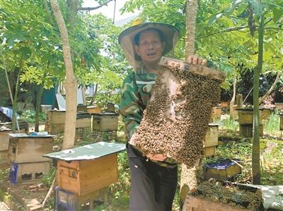72岁蜂农深圳养蜂 40年奋斗生活越来越甜