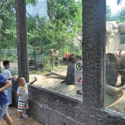 北京动物园半年劝阻不文明行为1100余起