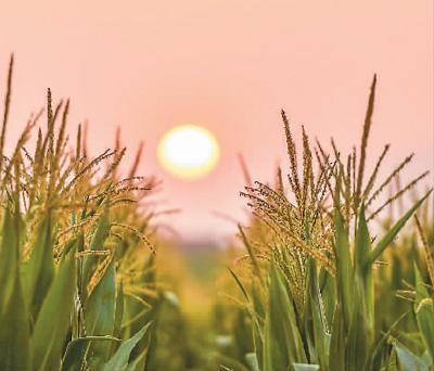 农业经济延续向好态势:生猪存栏恢复 农业投资回升