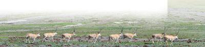 三江源将全面完成国家公园改革目标任务 当地有何变化