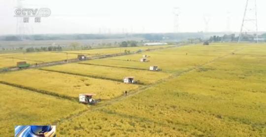 全国各粮食主产区秋收接近尾声 丰收已成定局