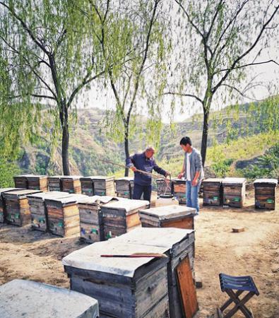 """""""甜蜜网事""""——致力于打造中国人自己的高品质蜂蜜"""