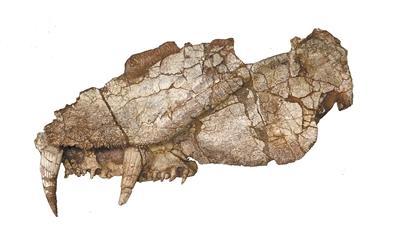 """始椎类最""""长寿""""化石刷新认知 灭绝时间比现有记录晚3000万年"""