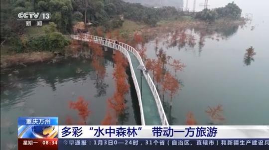 """人与青山两不负:探访重庆""""水中森林""""岸上人家"""