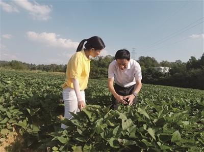 回乡创业种红薯 助几千贫困户喜增收