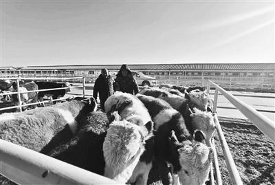 帮扶打造牛超市 农民生活牛起来