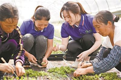 90后香港青年助贵州农户种花脱贫