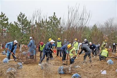 北京今年义务植树将达百万株