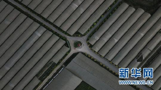 """贵州省金沙县西洛街道:绘就""""农旅融合""""发展新蓝图"""