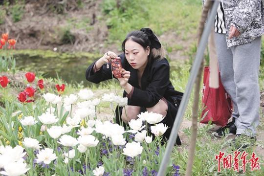 """上海花博会助力乡村振兴 """"花开中国梦""""吸引更多年轻人回流家乡"""