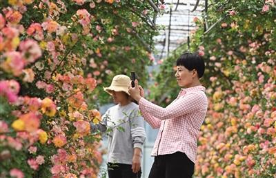 北京月季文化节下周开幕