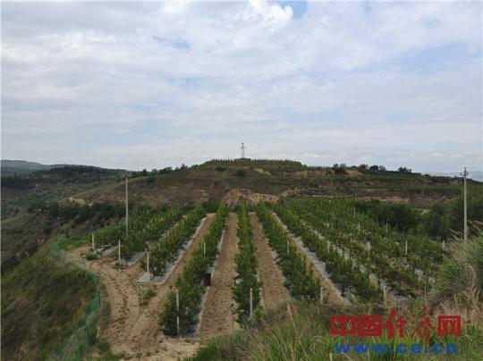 【走进红色美丽乡村】刘河湾:红了文化绿了山