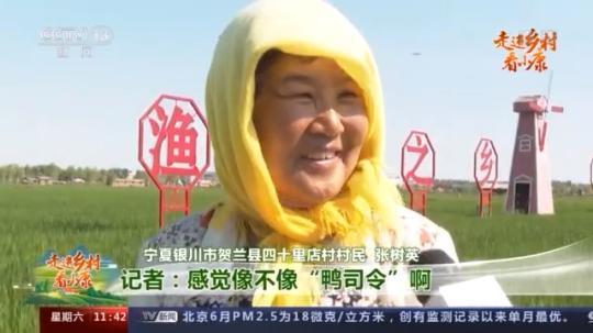 """走进乡村看小康丨稻田里有位""""鸭司令"""" 四十里店村找到致富新路径"""