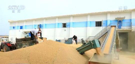 夏粮收购 | 优服务、强监管维护种粮农民利益 确保农民卖上放心粮、明白粮