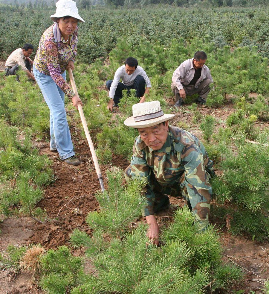 """退休少将张连印:麾下拥有205万个环境卫士的""""树司令"""""""