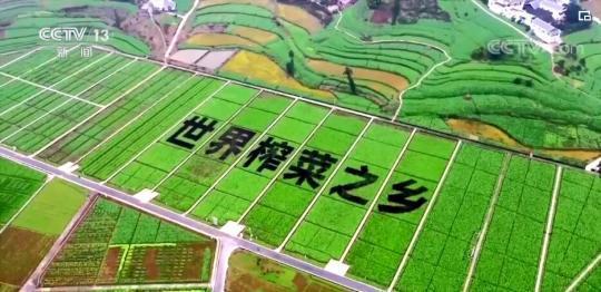 """中国国内高校首只克隆猫""""征婚"""" 为繁育研究进行准备"""