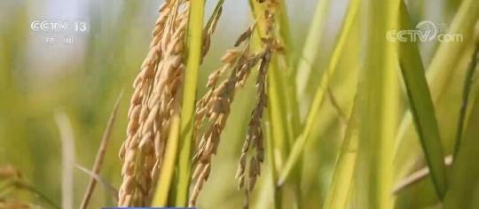 保障粮食安全 | 2030年我国累计建成12亿亩高标准农田 保障1.2万亿斤粮食产能