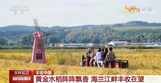 吉林延边:黄金水稻阵阵飘香 海兰江畔丰收在望