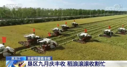 丰收节里看丰收 | 黑龙江垦区九月庆丰收 稻浪滚滚收割忙