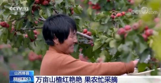 祖国南北各地收成着各具特色的农产品 一起感受丰产的高兴