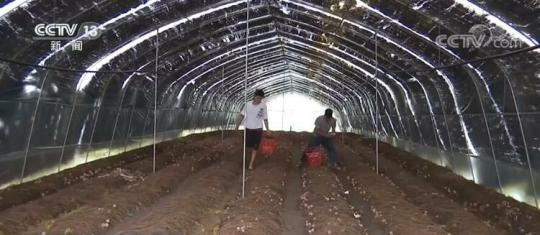 贵州安龙:种植红托竹荪 带动农户增收