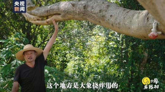 【相对论·大象来我村】从稳住大象的胃开始