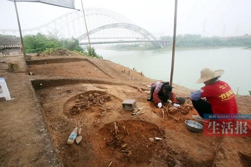 灰窑田贝丘遗址有新发现骸骨之下存大量密集螺壳