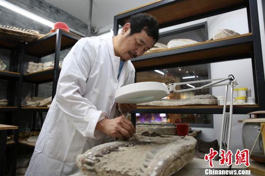 """古生物化石修复师和恐龙40年的""""不解之缘"""""""