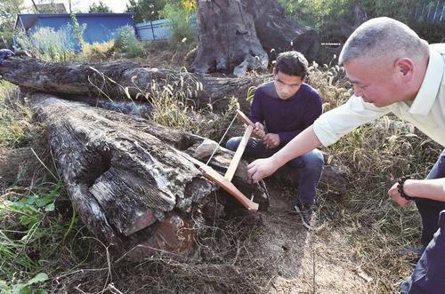 湖北发现明代金丝楠阴沉木:价值两千万愿捐给故宫