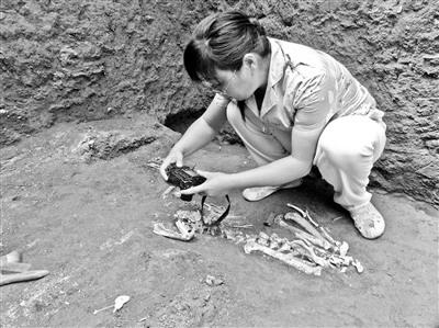 2200年前古墓現已滅絕長臂猿遺骸屬長臂猿新屬種