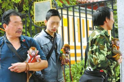 成都武侯祠游客遭强塞幼猴照相事后被索10元费用