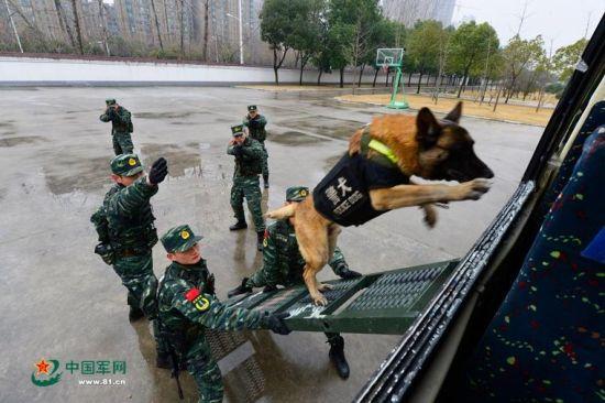 安徽武警备战春运出动无人机 警犬抢镜