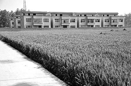 河南周口农田建12栋豪华别墅 村干部牵线出售
