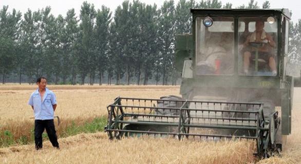 双重挤压致粮价严重倒挂 库存攀升农民收益大幅下降