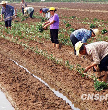 解决三农问题要从救穷转为鼓励勤劳致富