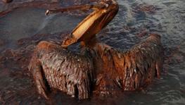 从墨西哥湾漏油到日本漏铀 能源安全堪忧