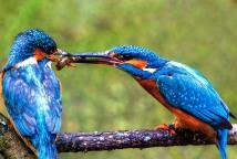 情人节 看看动物们的求婚大作战